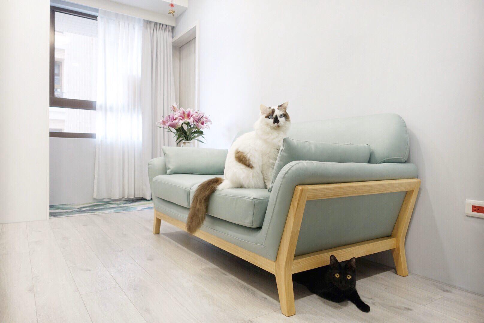 【生活】AJ2 西雅圖|貓抓布沙發開箱體驗